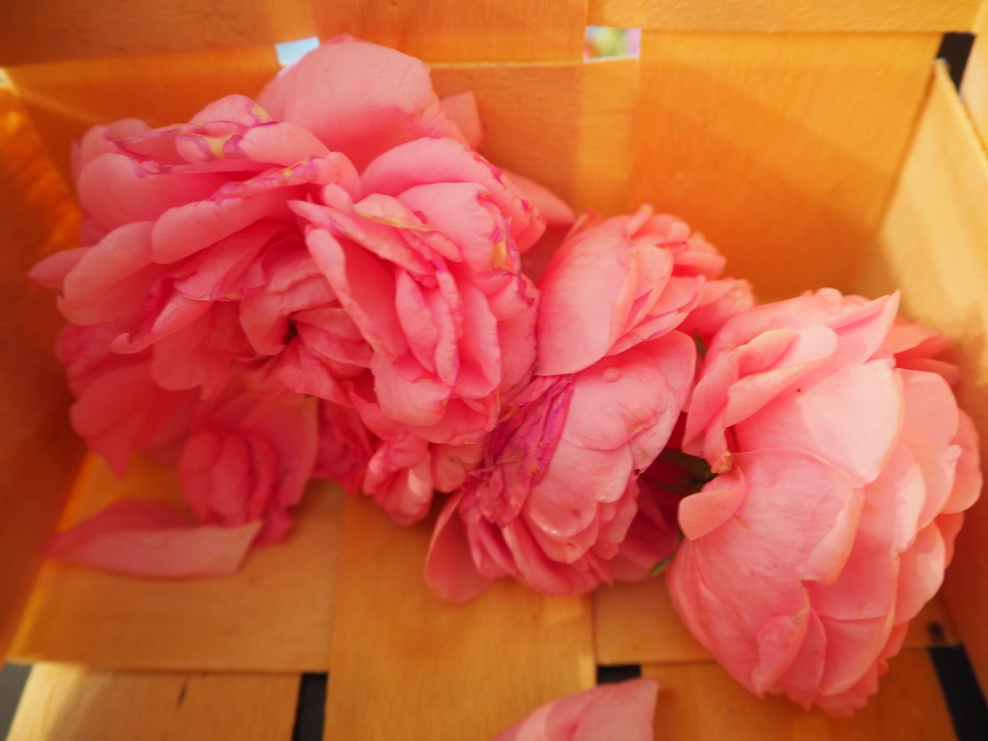 hydrolate aus damaszener rosen selbst destillieren 23 juni 2017. Black Bedroom Furniture Sets. Home Design Ideas